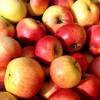 Förstina Sprudel eröffnet die Apfel-Keltersaison
